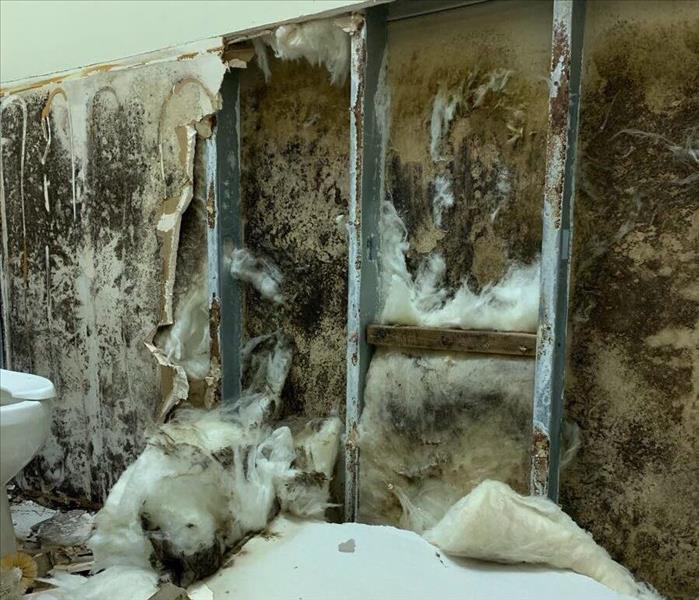 Remediation performed in a local Lewisville business after microbial growth is found Before