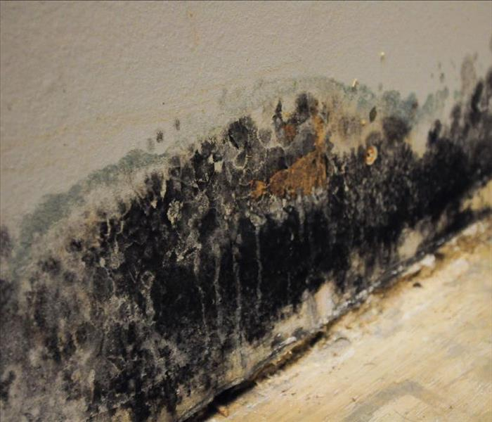Mold Remediation How to Decrease Your Mold Exposure