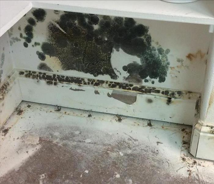 Mold Remediation Customer found mold when they came back from vacation!