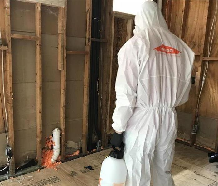 Mold Remediation Mold Needs the Right Environment to Grow